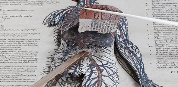 Get under the skin of Renaissance anatomy   Cambridge University Library